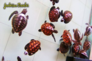 Sea turtle breeding house