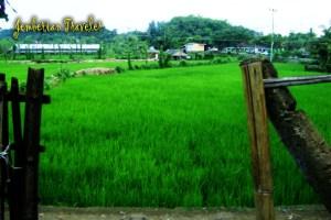 The Sasak's Field