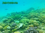 Underwater Menjangan Barat