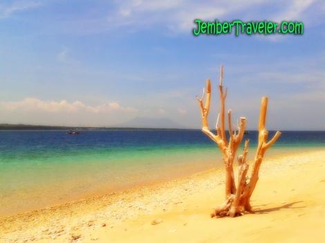 Jember Traveler First Menjangan 11