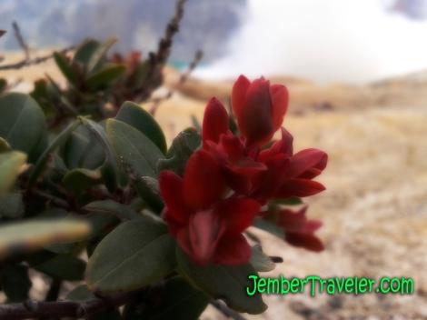 Flora di atas dinding kawah