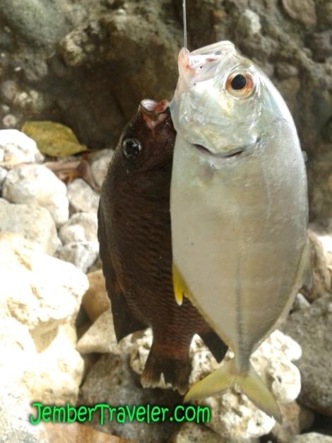 Ikan yang Ditangkap :D