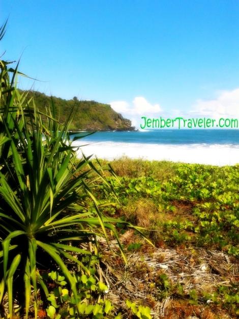 Jember Traveler Rawa Cangak 03