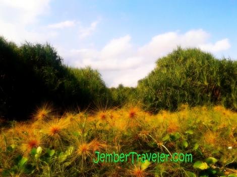 Jember Traveler Rawa Cangak 04