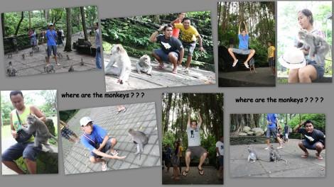 Monyetnya mana?