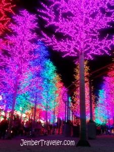 Hutan Cemara Lampu