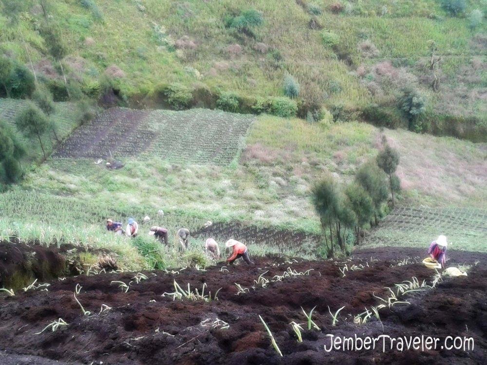 Puncak B29 Argosari Lumajang : Desa di Ujung Awan (6/6)