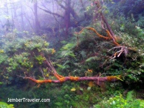 Dingin melanda menyembunyikan suara alam