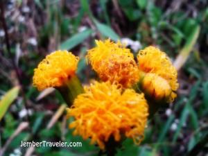 Bunga kuning entah namanya