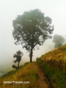Pohon tua yang kurindukan