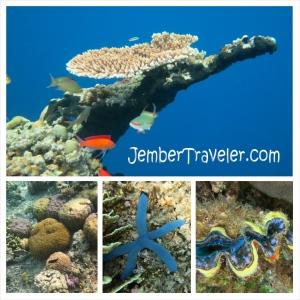 Jember Traveler Segambreng Menjangan 13