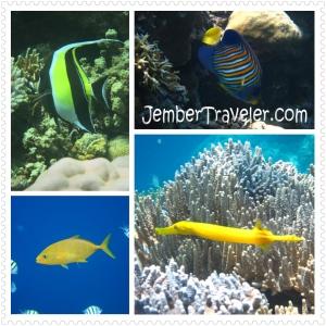 Jember Traveler Segambreng Menjangan 20