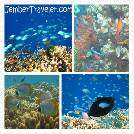 Jember Traveler Segambreng Menjangan 24