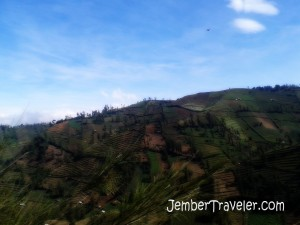 Sawah di pegunungan
