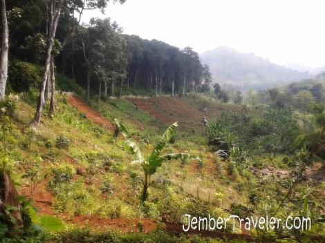 Pemandangan melewati perkebunan