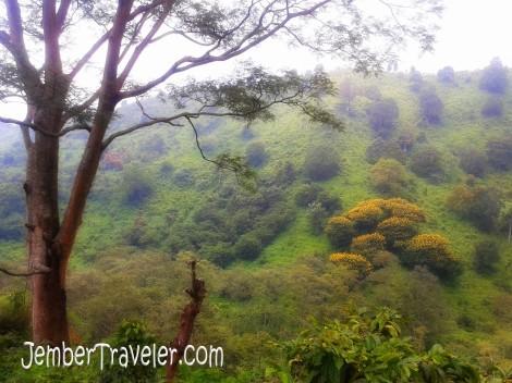 Lereng Pegunungan Argopuro