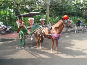 Nah ini kuda yang meledekku tadi. *jitak*
