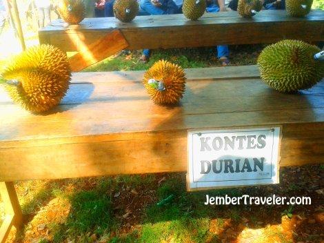 Kontes durian