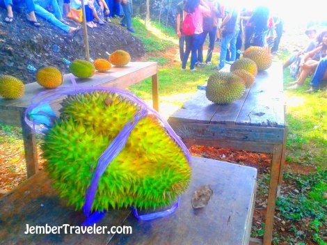 Durian terbesar di festival ini