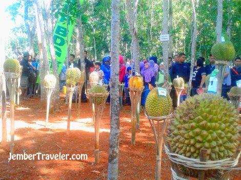 Lelang durian