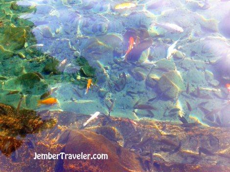 Ikan-ikan dilihat dari atas