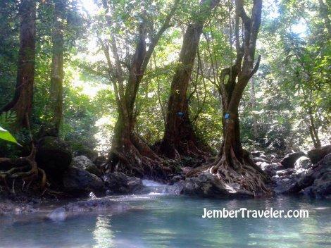 Pohon menyaring air yang mengalir