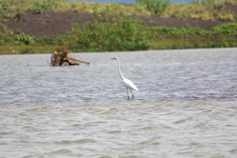Burung di muara. Photo by : Arif Angga Yudha