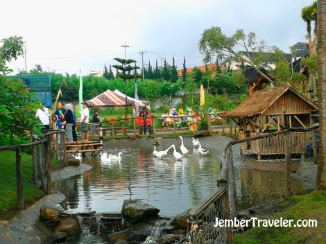 Kawanan bebek juga penghuni floating market