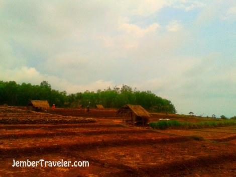 Area Pertanian