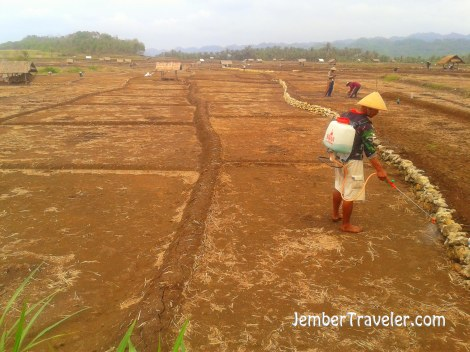 Menggemburkan Tanah