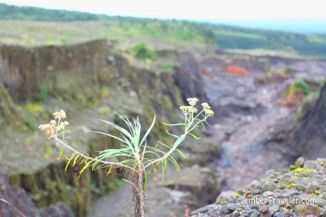 Jalur lava dari tepi jurang