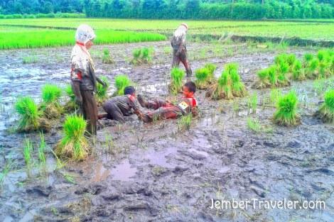 Mereka mengetahui bibit padi dan menanamnya, tapi mereka lebih suka bermain lumpur