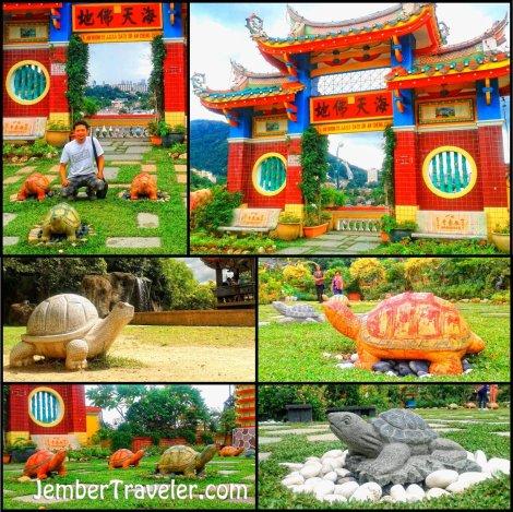 Taman kura-kura
